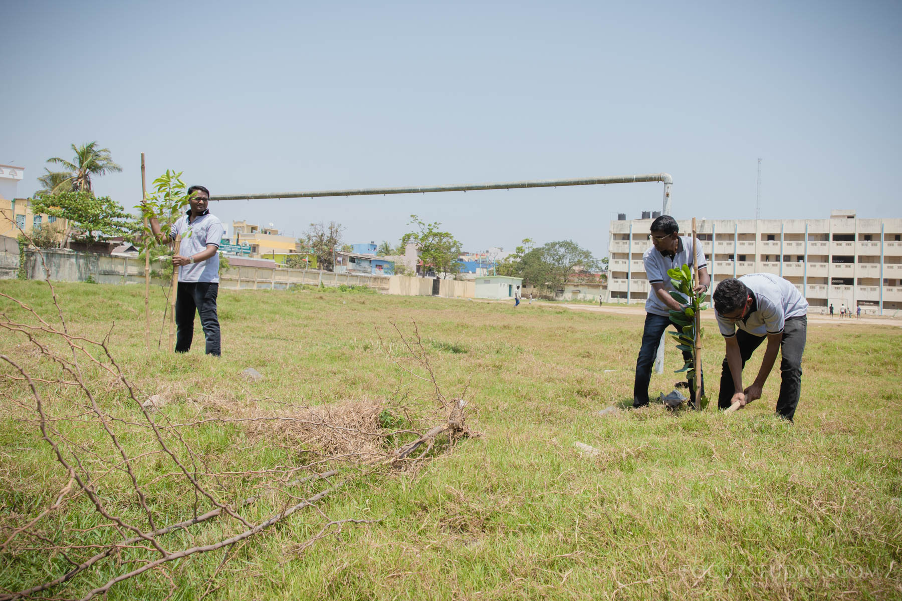 tree plantation programme focuz studios
